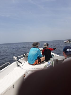 Scalloping Family activity
