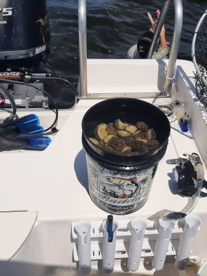 Scalloping Private Charters