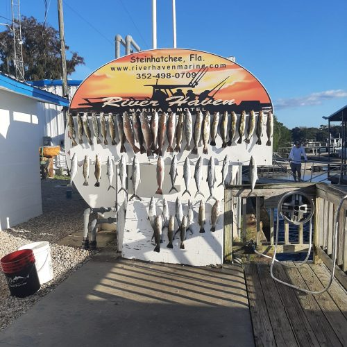 fishing trips at steinhatchee